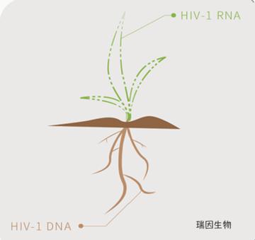 HIV-1 DNA定量检测适应症