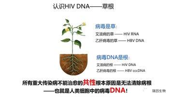 微量精准HIV-1 DNA定量检测应用 1