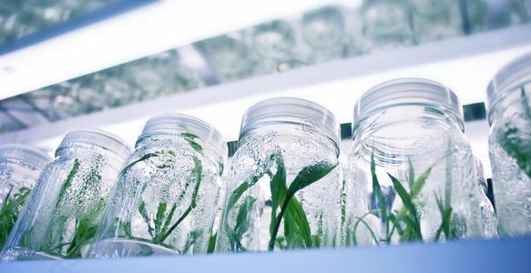 植物组培实验室设计