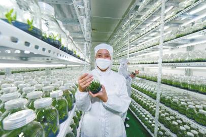 案例:尼泊尔植物组织培养实验室