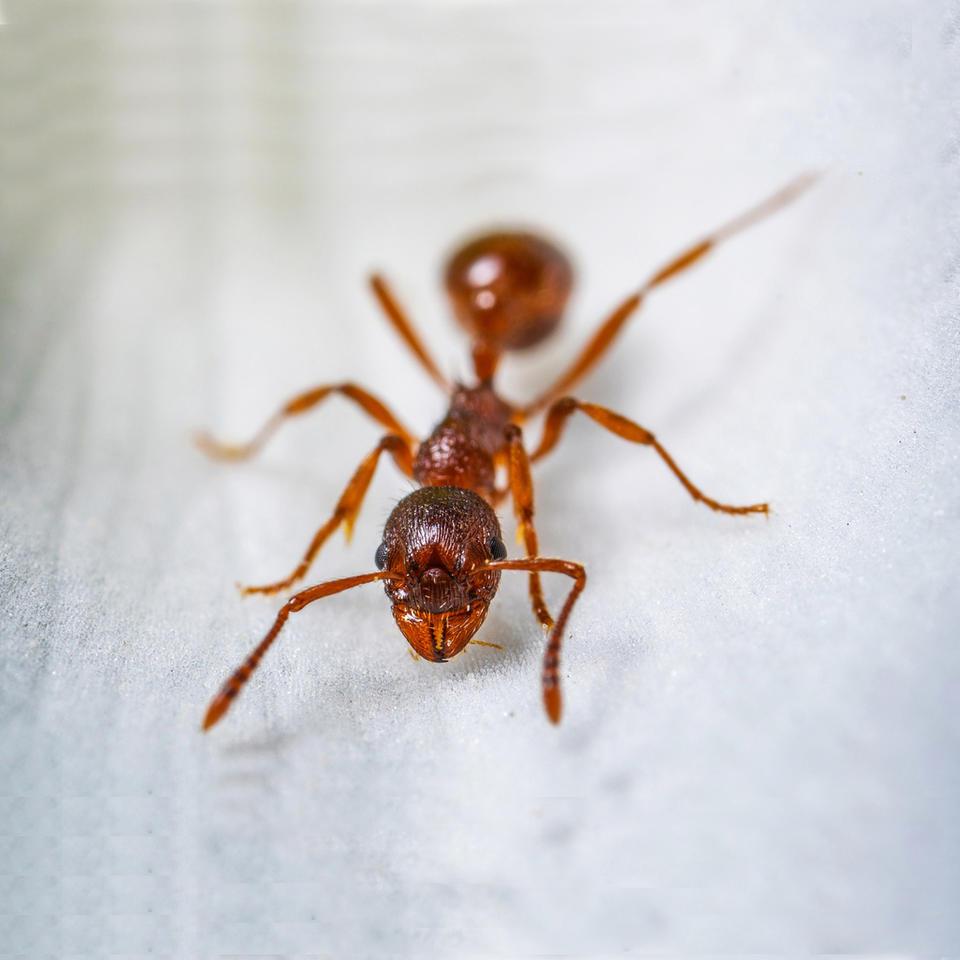 专业灭蚂蚁服务