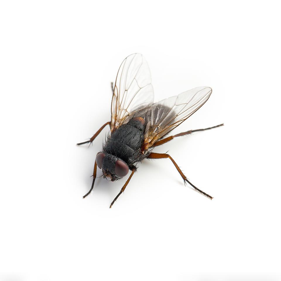 专业灭蝇服务