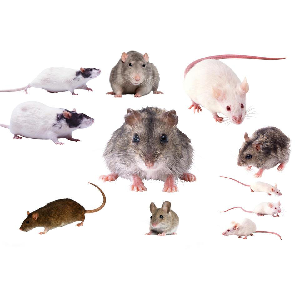 专业灭鼠服务