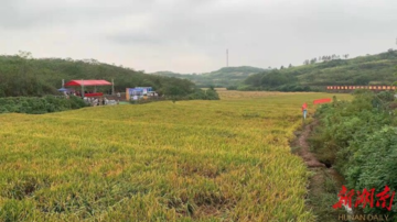 1603.9公斤!袁隆平团队杂交水稻双季亩产创新纪录