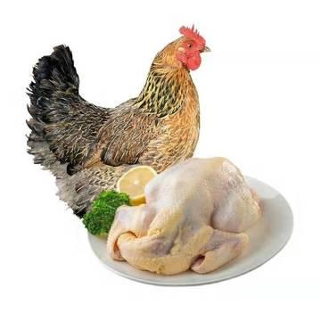 大化县委书记到盒马鲜生推介大化七百弄鸡