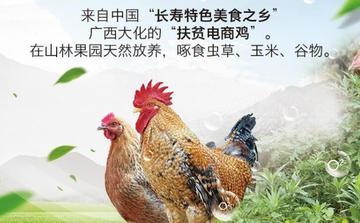 《大化瑶族自治县七百弄鸡产业保护条例》立法工作启动