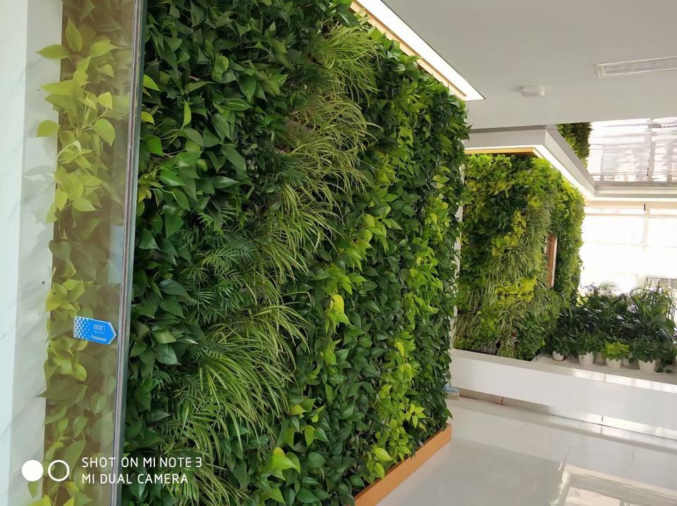 天津天房地产植物墙,天津北大资源阅府植物墙,天津北大资源阅府垂直绿化,天津河西区植物墙