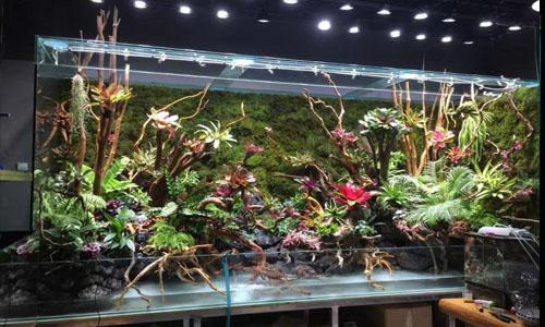 天津雨林缸,天津办公室雨林缸,天津草缸,天津水路缸,天津热带雨林缸