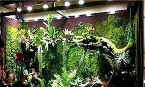 天津津南国展中心热带雨林景观,天津津南万达广场热带雨林,天津津南区首创地产热带雨林,天津吾悦广场热带雨林景观