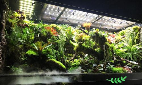 天津西青区热带雨林缸,天津花圃热带雨林缸,天津雨林缸,天津中北镇雨林缸,天津雨林缸定做