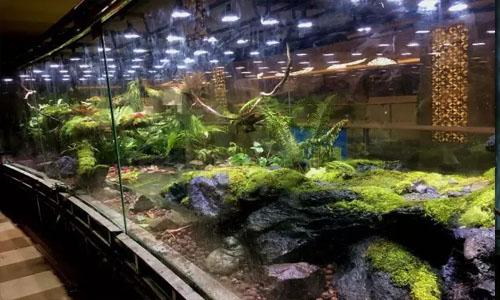 天津四季酒店雨林缸,天津南开区四季酒店热带雨林景观缸,天津五大道雨林缸景观,天津热带雨林景观,天津雨林缸,