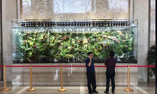 天津武清区热带雨林缸,天津武清区雨林缸定做,天津雨林缸玻璃,天津热带雨林缸景观