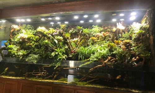 天津南开区雨林缸,天津南开区热带雨林景观,天津融创地产雨林景观,天津融创地产售楼雨林缸,天津热带雨林缸景观