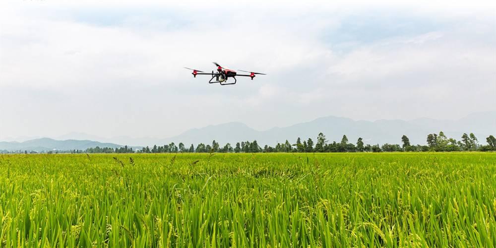 无人机农林服务