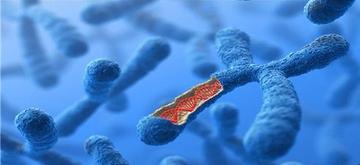 如何看待干细胞在抗衰老领域发挥的作用?
