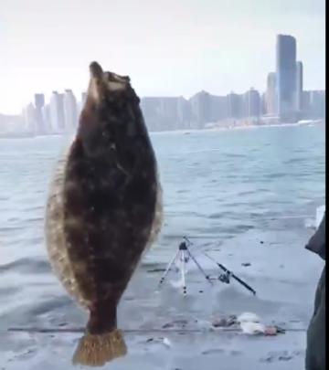 大连海岸边钓上来一条鸦片鱼