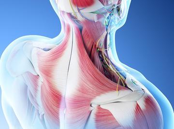 肌骨系统——生命源动力?