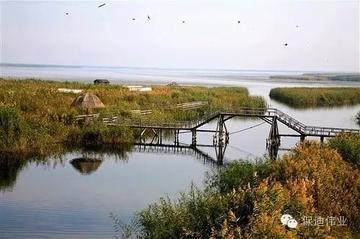 超广角鸟类观测系统-保迪伟业