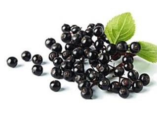 接骨木莓系列产品