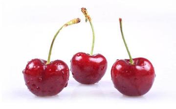 上海清关公司 代理水果进口报关单据