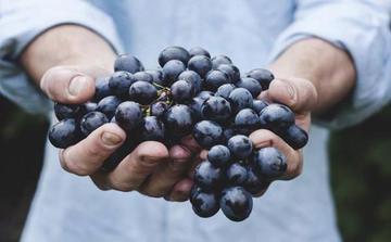 西班牙水果葡萄进口报关注意事项