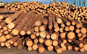 木材进口报关知识之木材分类